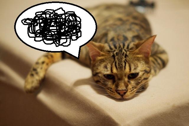 モヤモヤ猫